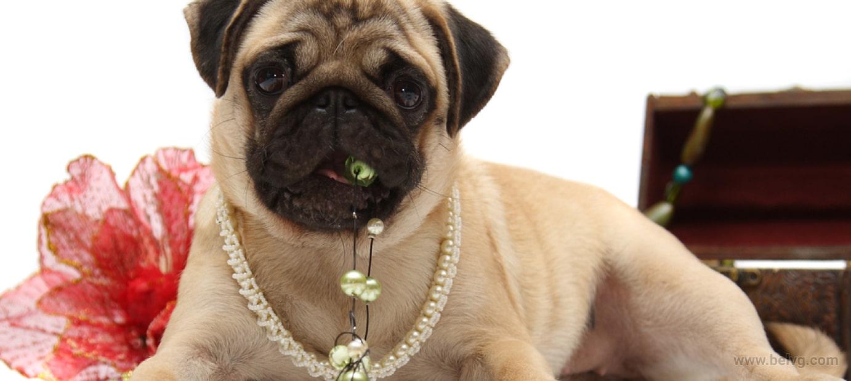 Pet Jewelry BelVG