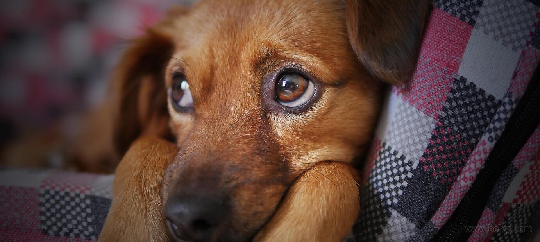 best work from home ideas - Pet Sitter