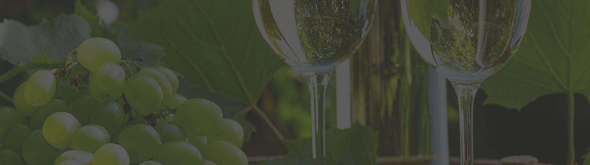 vinospirit-banner